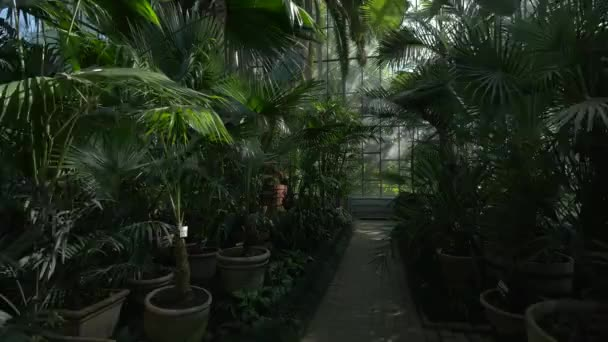 Palm trees in a greenhouse