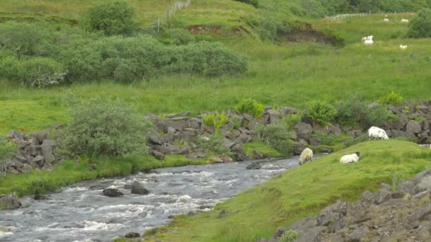 A river flowing by pasturing goats