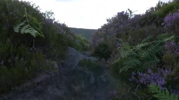 A path through green bushes