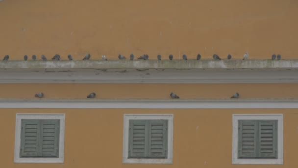 Row of pigeons standing on a wall