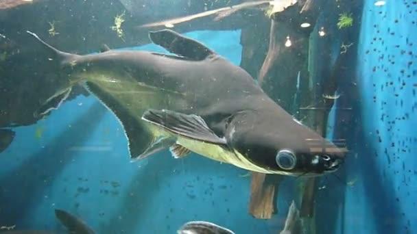 Baby shark in aquarium