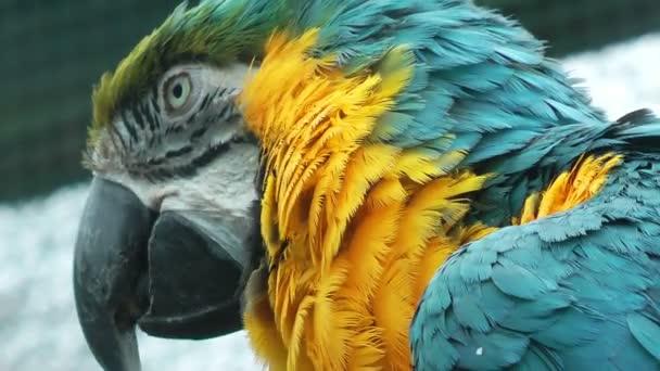 Színes kakadu papagáj