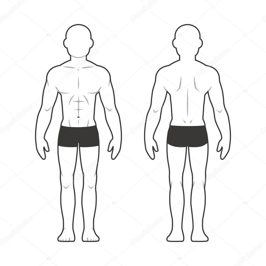 Athletic Male Body Chart Stock Vector Sudowoodo 100262178