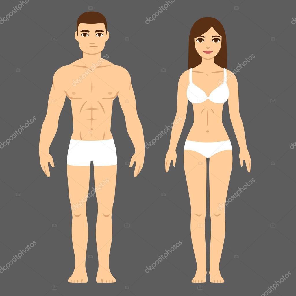 Cuerpo masculino y femenino — Archivo Imágenes Vectoriales ...