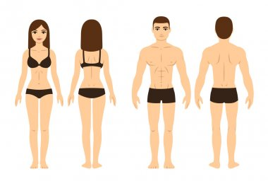 Male and female body, front and back. Isolated vector illustration. stock vector