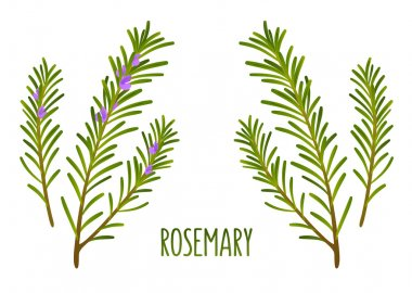Rosemary sprigs
