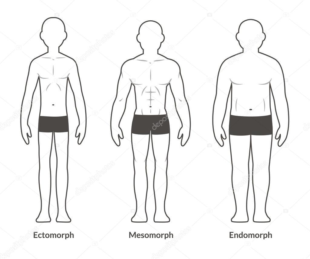 Männlicher Körper-Typ-Diagramm — Stockvektor © Sudowoodo #97856902