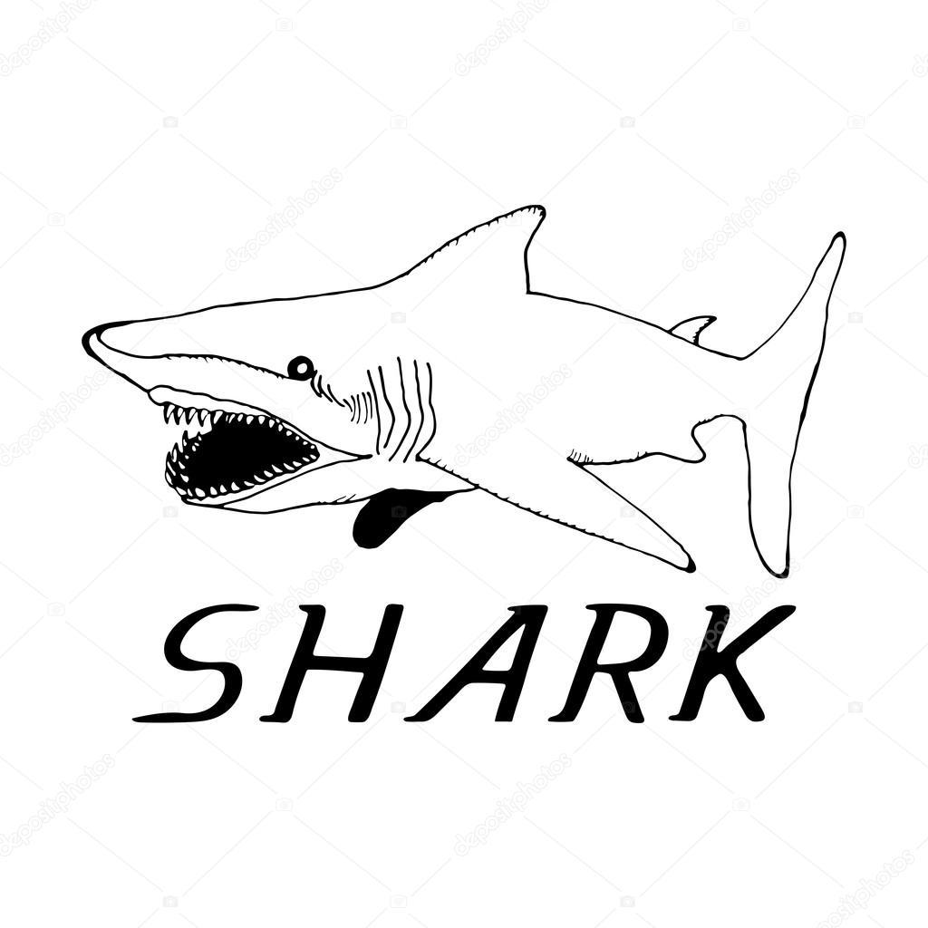 boceto mano dibujar un tiburón en el estilo — Vector de stock ...