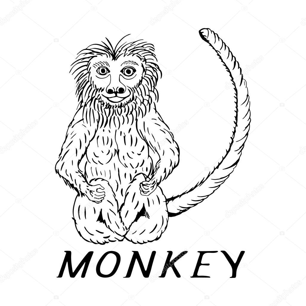 hand draw a monkey stock vector gennadiikorchuganov 93903550