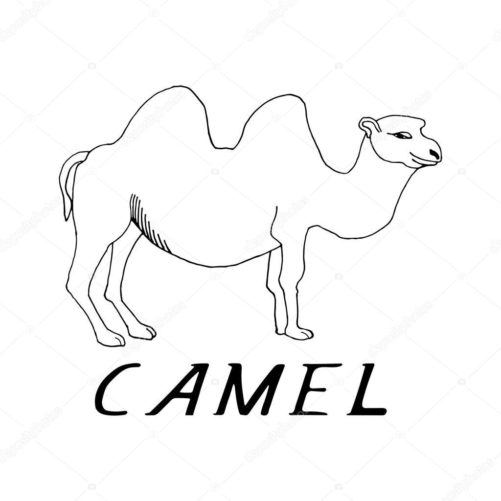 mano dibujar un camello — Vector de stock © GennadiiKorchuganov ...