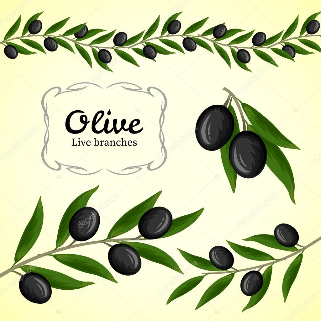 Vector collection of olive branch, black olives