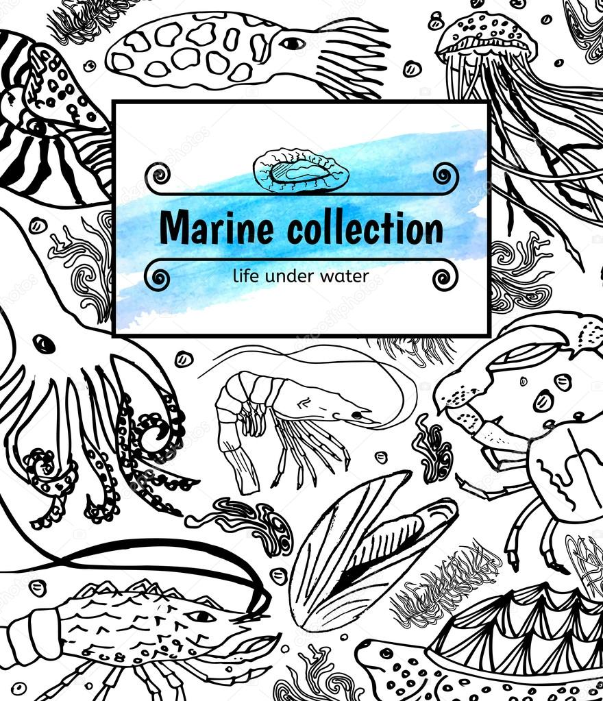 Sea collection, seafood: octopus, shrimp, lobster,seaweed, crab, mussels, cuttlefish