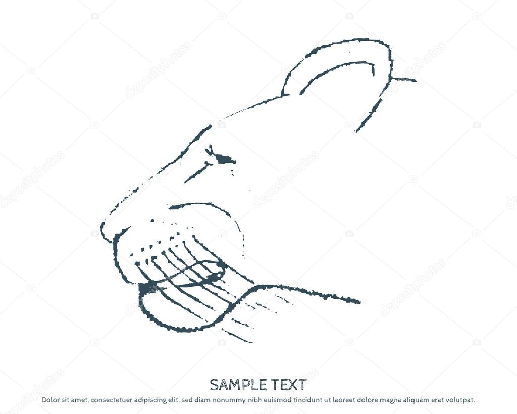 Sketch of head of a wild cat lionesses, Panthers. Design element