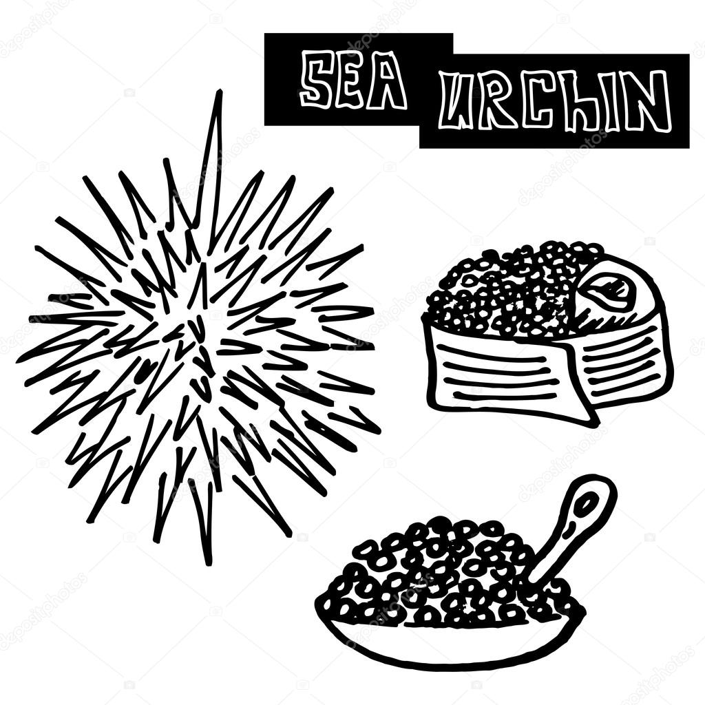 seafood sea urchin, caviar and sea urchin sushi. specialty food, luxury food