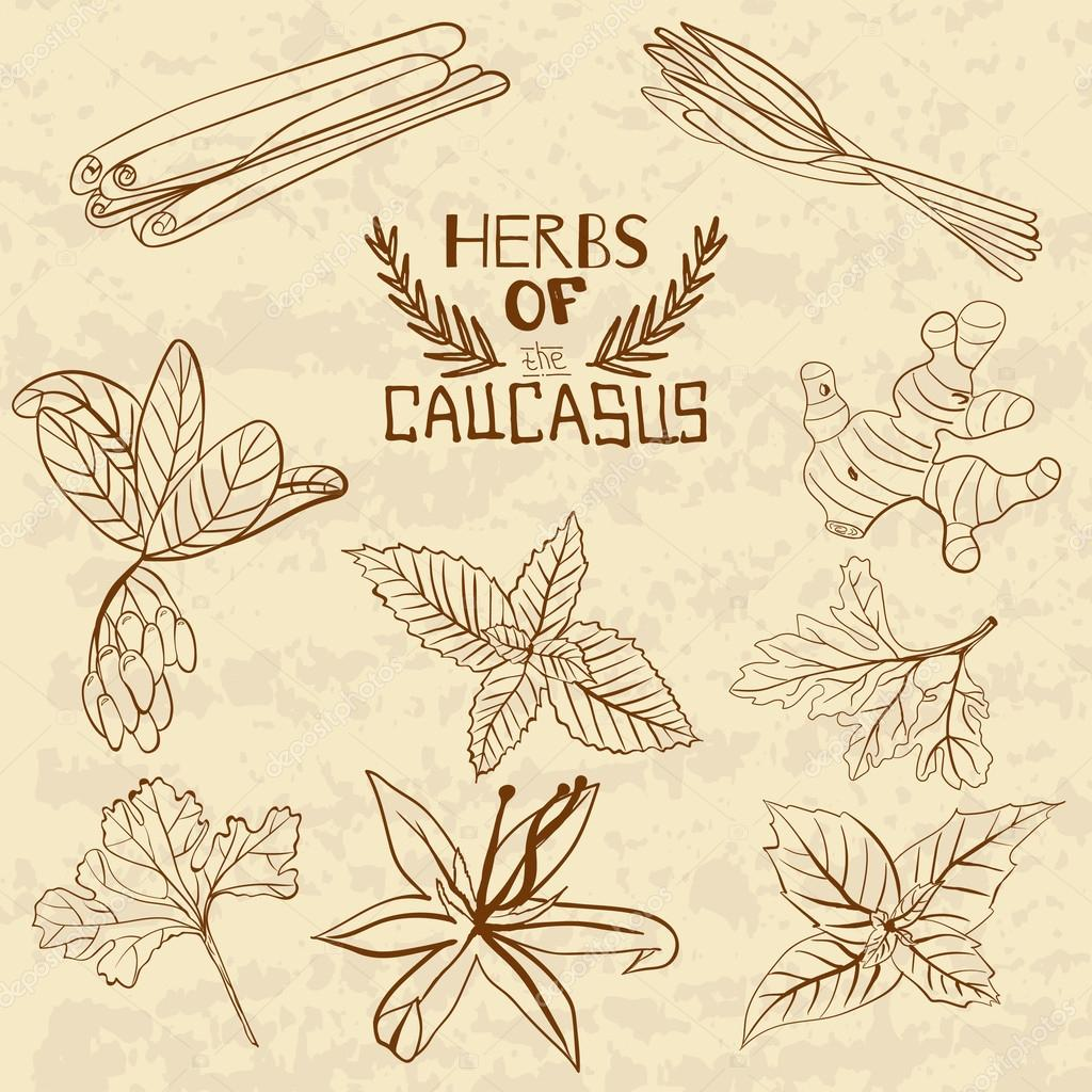 Spices Of The Caucasus. A collection of distinctive herbs and spices of the Caucasus.