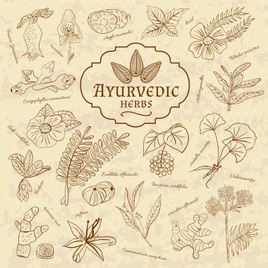 Retro illustration of Ayurvedic herbs. Set of web elements