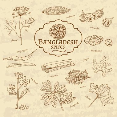 Set of spices and herbs cuisines of Bangladesh on old paper in vintage style. Vectorn