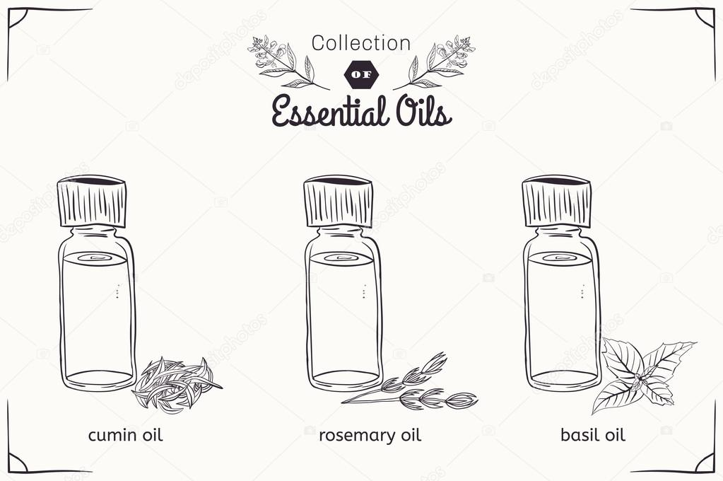 A set of essential oils in black and white style: cumin, rosemary, Basil.