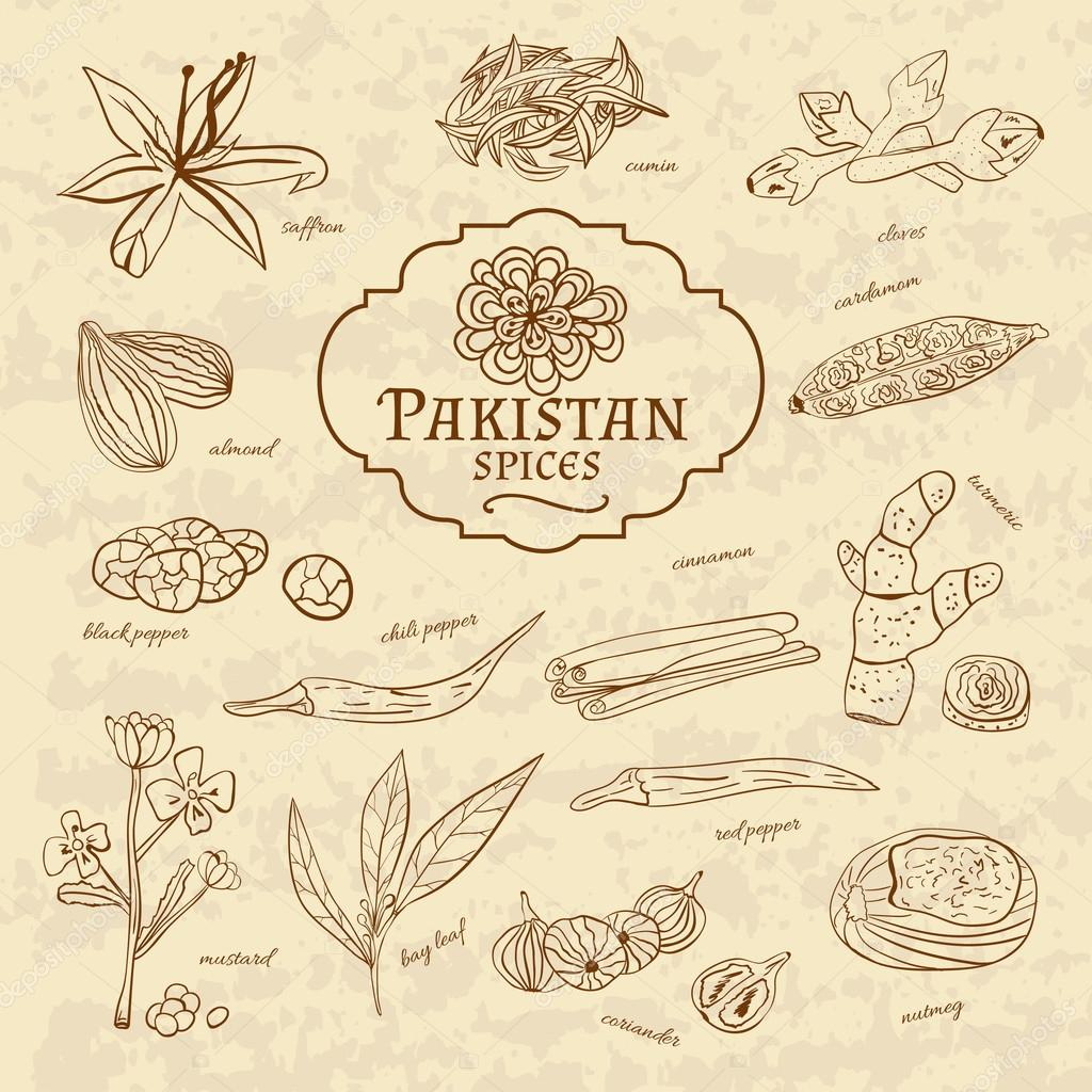 Set of spices and herbs cuisines Pakistan on old paper in vintage style. Vector