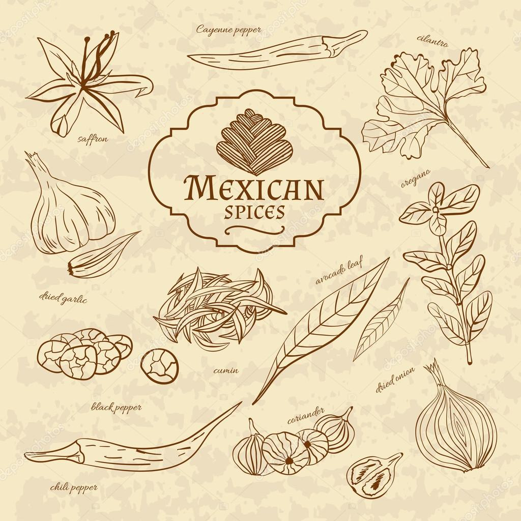 Set of spices and herbs cuisines of the world Latin America Mexico on old paper in vintage style. Vector