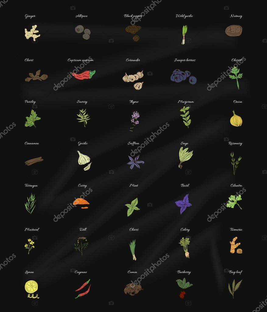Collection of herbs and spices for the kitchen on the blackboard. Vector