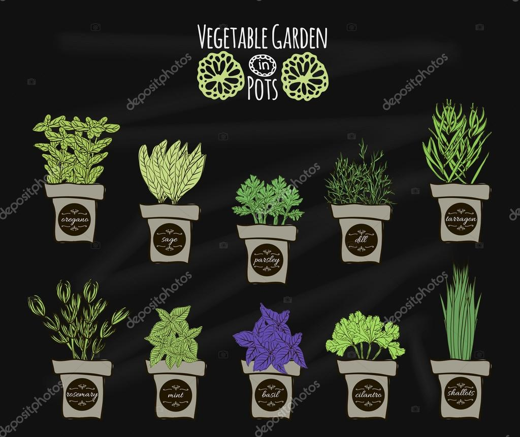 A set of balcony spices for cooking on the chalkboard. illustration