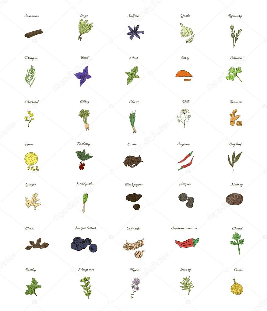 A large set of isolated herbs and spices for cooking on white background.  illustration