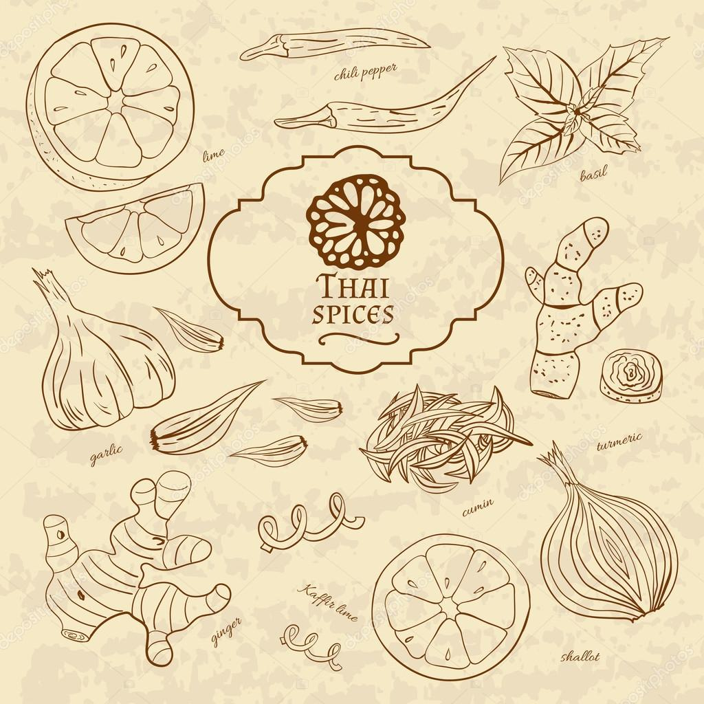 Set of spices cuisines of Thailand on old paper in vintage style.  illustration