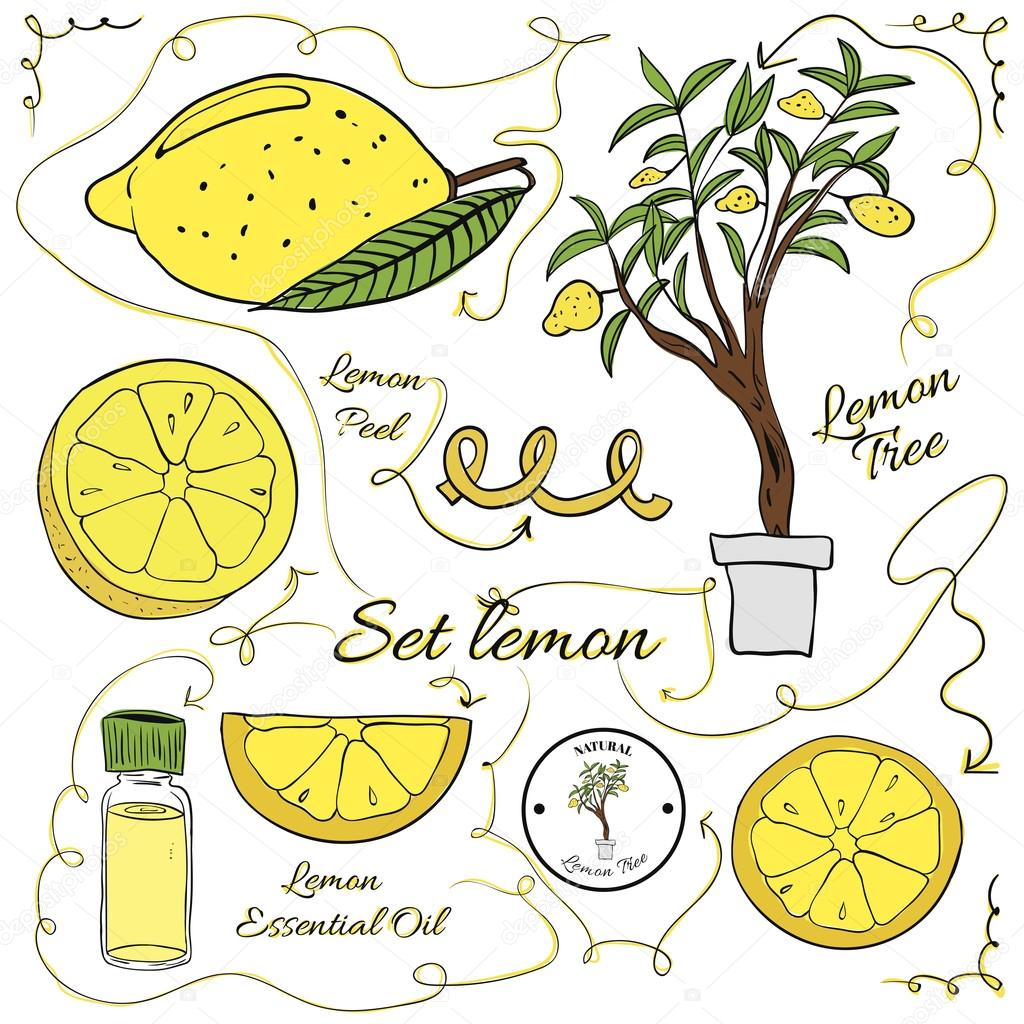A large set of isolated colorful lemon elements for design on white background. illustration