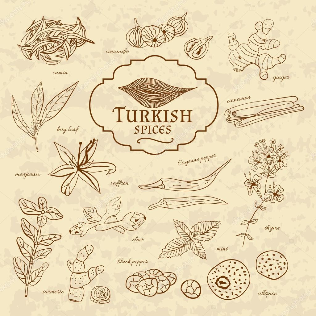 Set of spices and herbs cuisines Turkey on old paper in vintage style.  illustration