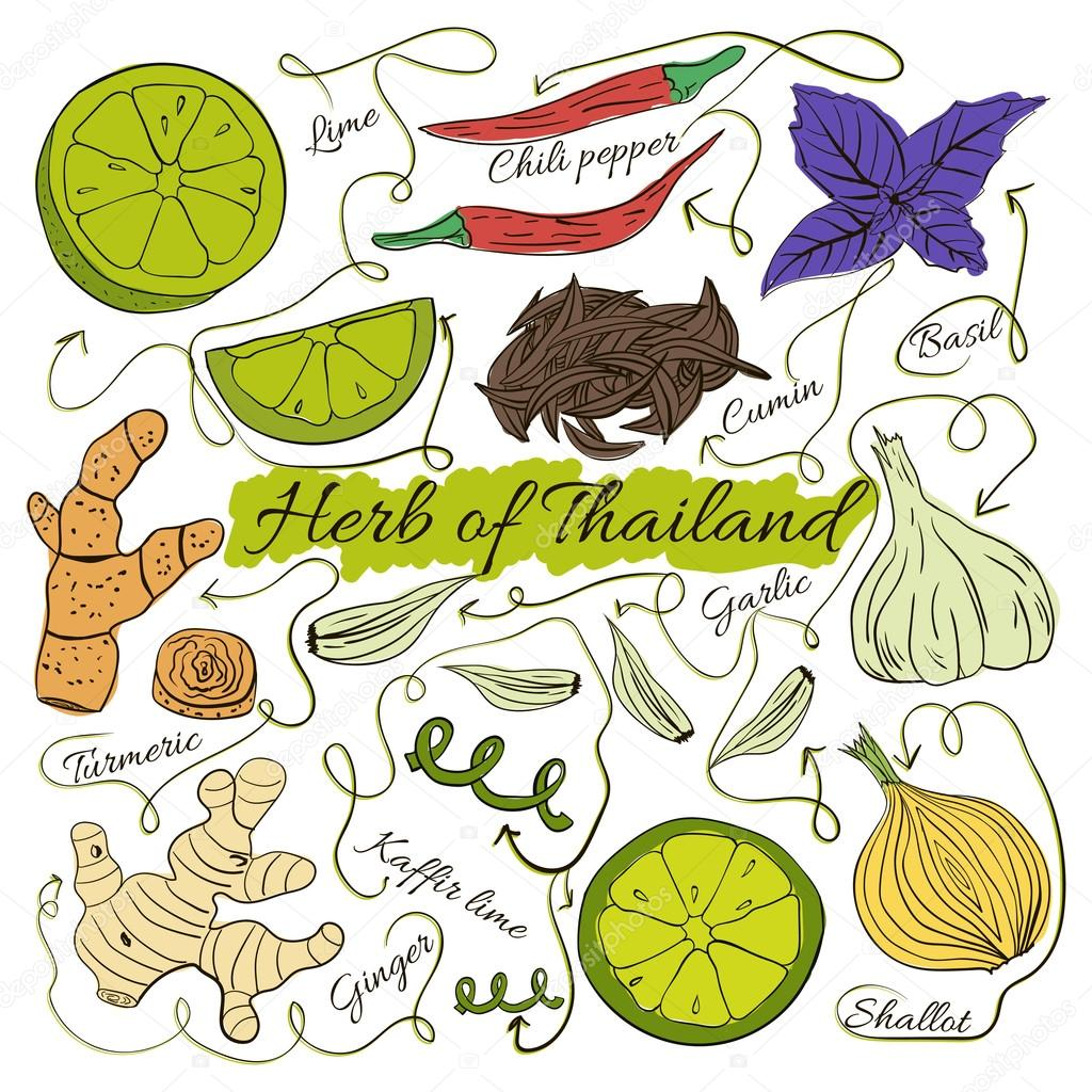 Colorful insulated set of local hand drawn herbs and spices dishes of the world on white background. Thailand. Vector