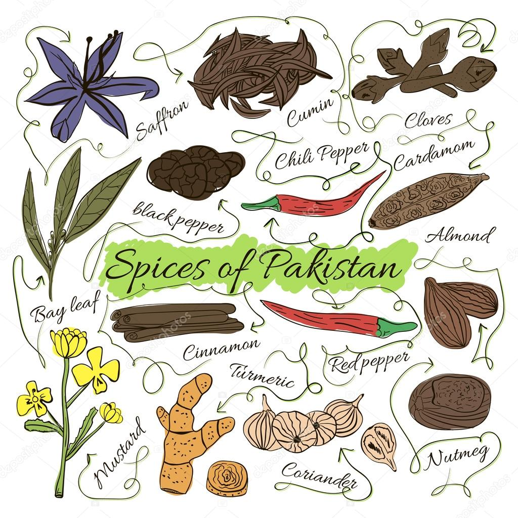 Colorful insulated set of local hand drawn herbs and spices dishes of the world on white background. The indicating arrows. Pakistan. Vector illustration