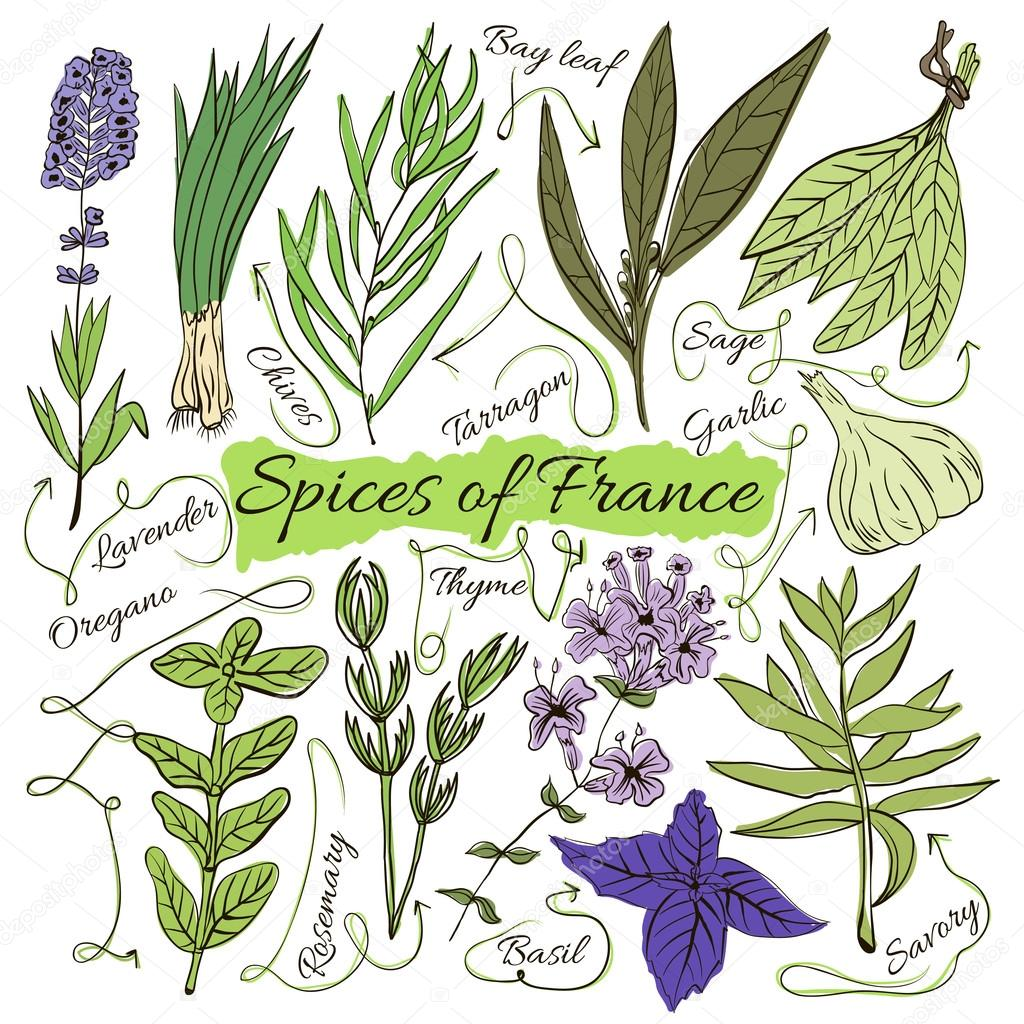 Colorful insulated set of local hand drawn herbs and spices dishes of the world on white background. The indicating arrows. Favourite France. Vector
