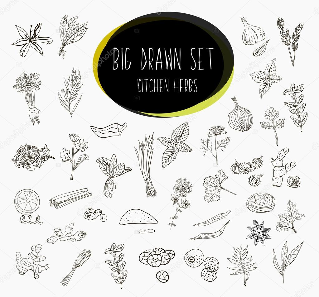 Hand-sketched a large collection of elements spices in our kitchen. Herbs and supplements for cooking. Vector
