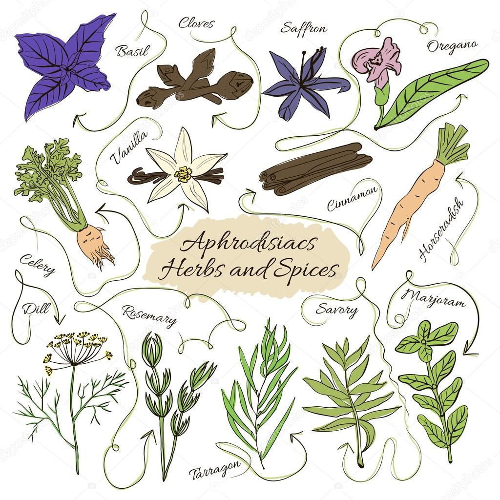 Hand drawn vector collection of spices with pheromones aphrodisiacs and herbs