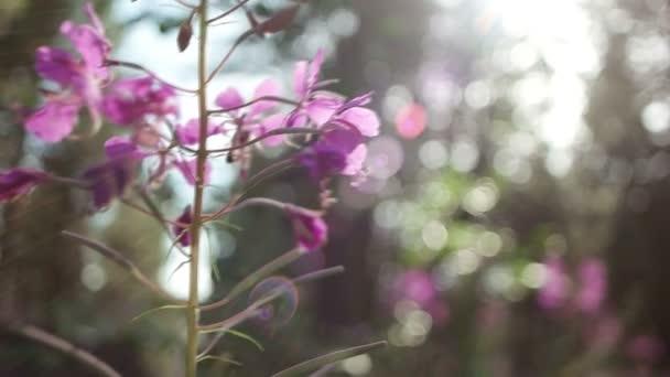 květiny v přírodě