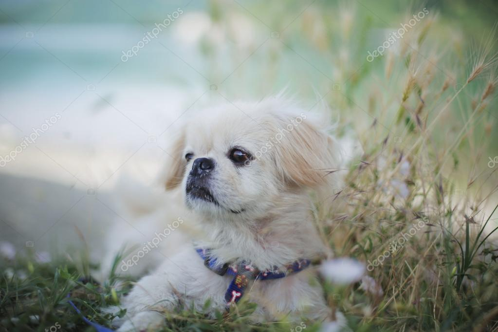 portrait of dog in field