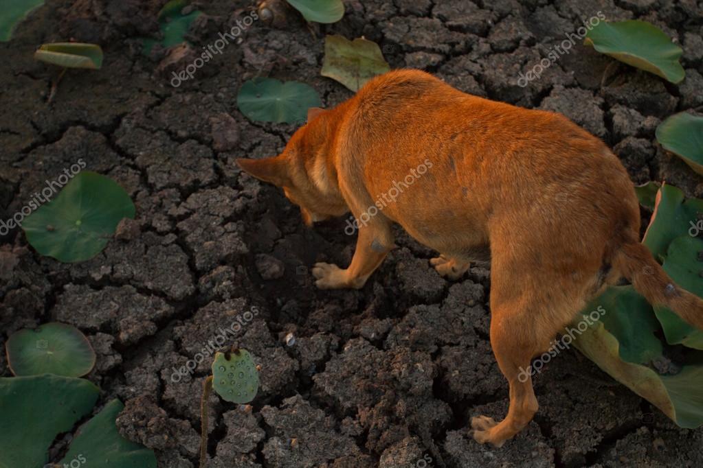 Dog Eat Clay