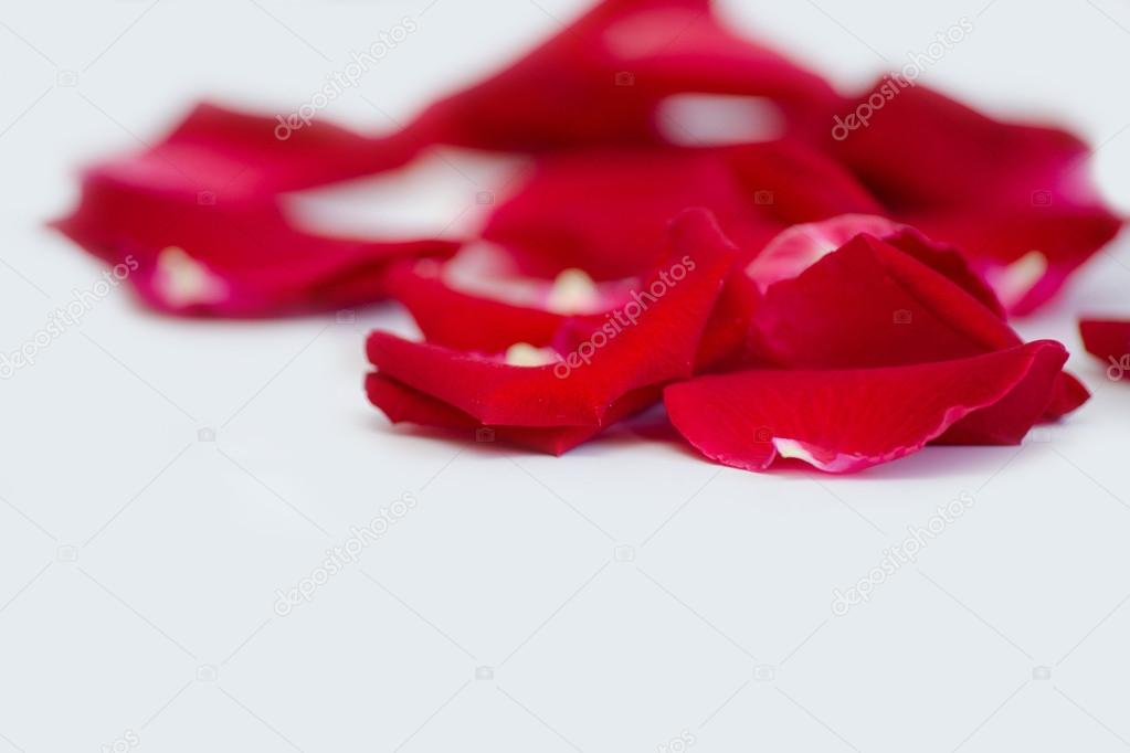 Rosenblüten — Stockfoto © AleksaMax #75251087