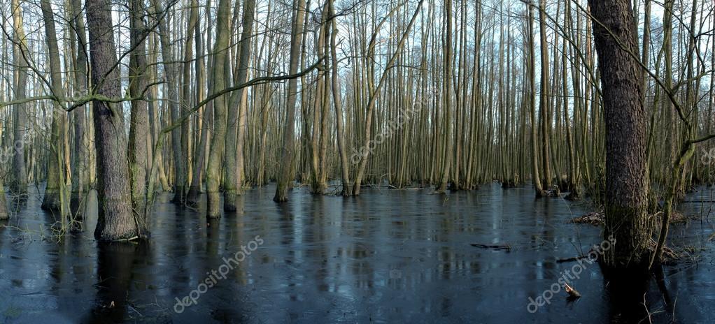 Trees in water swamp
