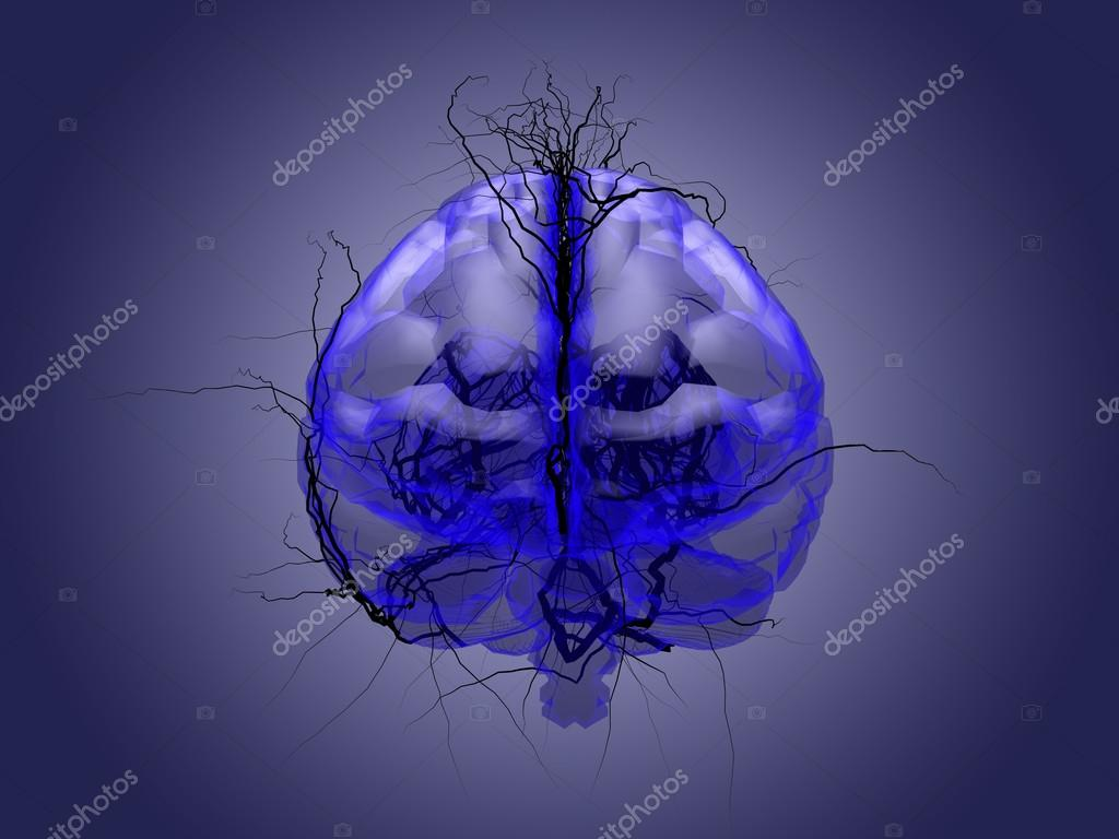 Brain root concept of a root growing in the shape of a human bra