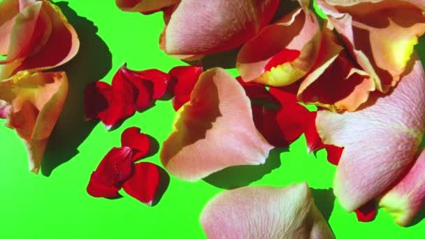 Flower Petals on Green Screen