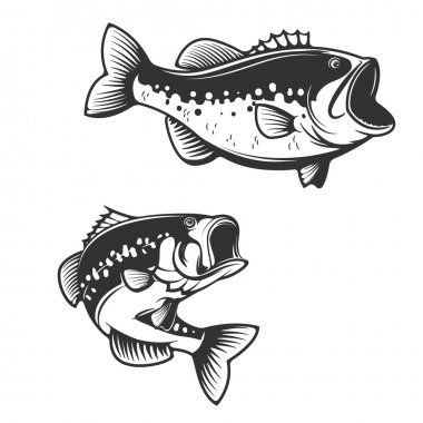 Sea bass fish silhouettes isolated on white background. Design e