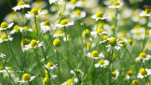 Virágok a tavaszi réten