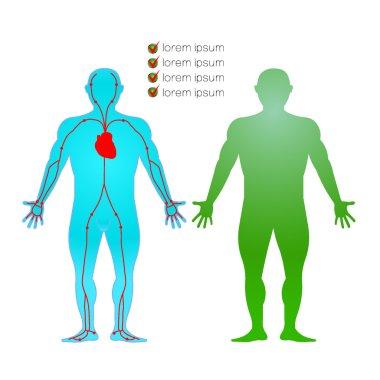 human artery