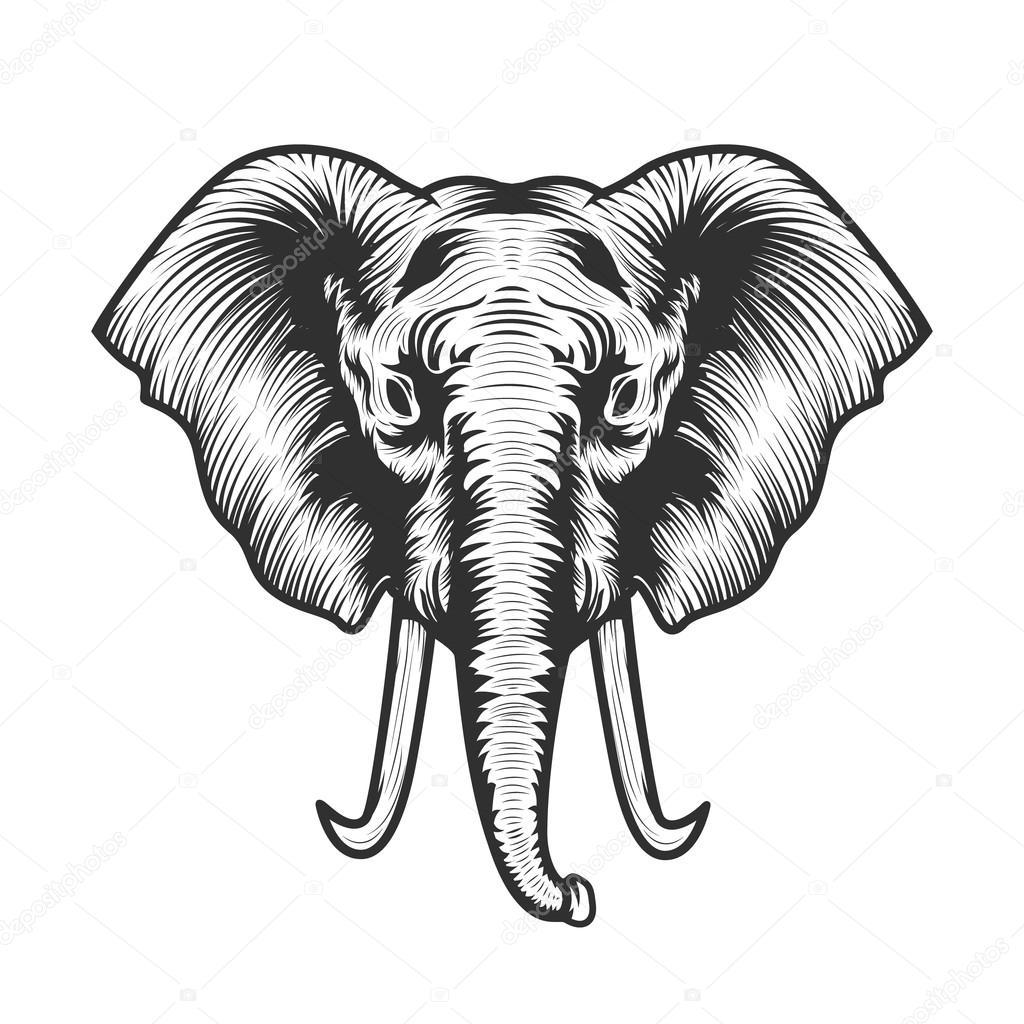 elephant head illustration. — Stock Vector © art-l@i.ua #97179274