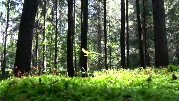 V lese na houbách v letním dni.