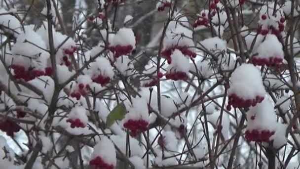 A bokor a hó