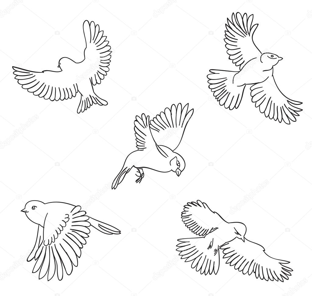 Set of sketches of flying swallows stock vector illustration - Stock Illustration Sketch Set Of Flying Birds Stock Vector 114369572