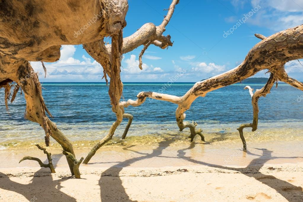 Dead trees on a tropical beach, Banda Islands, Maluku, Indonesia